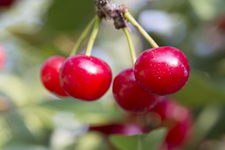 Image result for tart cherries