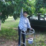 u-pick cherry picking for elderly in northern Michigan near Traverse City