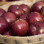 Michigan Macintosh apples near Traverse City