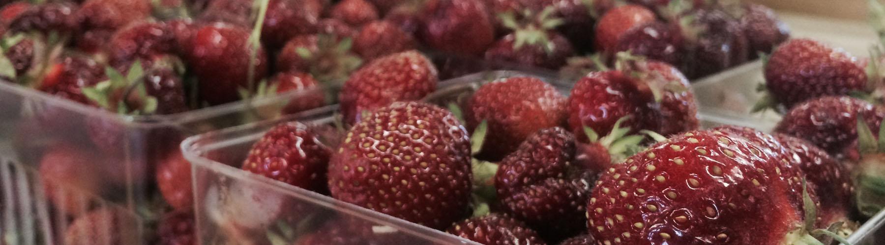 fresh michigan strawberries