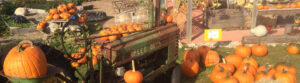 Pick Your Own Pumpkins at King Orchards